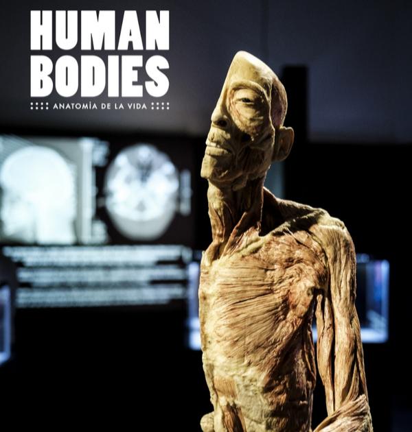 Human Bodies_imatge promocional_19-20_600x630