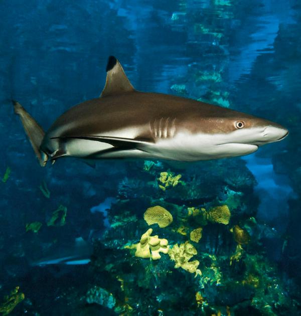 foto principal_aquarium barcelona_600x630